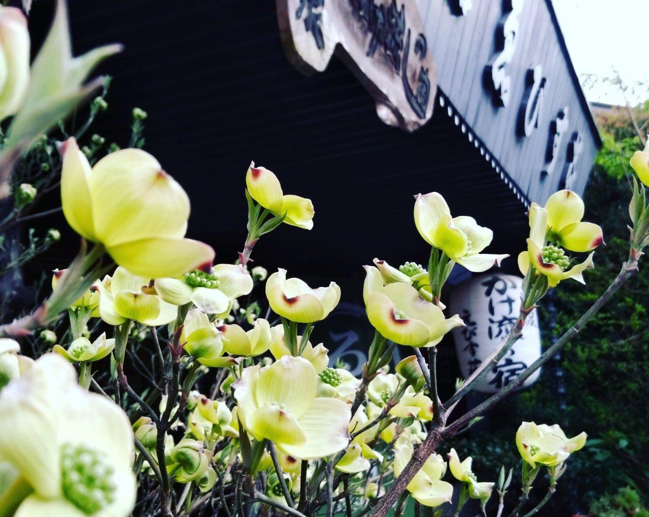 奈良|十津川温泉 ゑびす荘